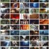 stáhnout Strom života